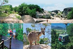 Kuranda Google Images, Places Ive Been, Stuff To Do, To Go, Australia, Spaces, Vacation, Travel, Animals
