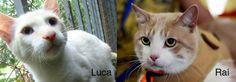 Luca e Raí, dois irmão que lutaram contra a FeLV, história no blog