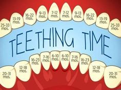And Your Baby: Symptoms And Remedies Excellent teeting chart - when to expect to see those teeth!Excellent teeting chart - when to expect to see those teeth! Baby Trivia, Pinterest Baby, Baby Life Hacks, Mom Hacks, Baby Information, Baby Planning, Baby Care Tips, Baby Health, Kids Health