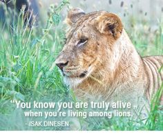 """""""You know you are truly alive when you're living among lions"""" - Isak Dinesen / Karen Blixen, from Out of Africa. #quote #travel #africa"""