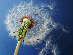 His words, like the seeds of an undesired weed, spread viciously throughout the people of the nation Dandelion Wish, Skin Problems, Natural Living, Things To Know, Healthy Tips, Your Skin, Weed, Eco Friendly, Improve Yourself