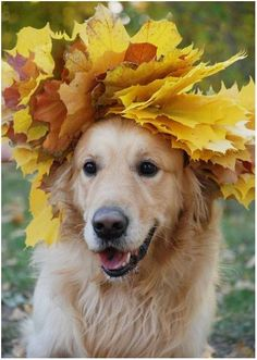 Autumn Golden