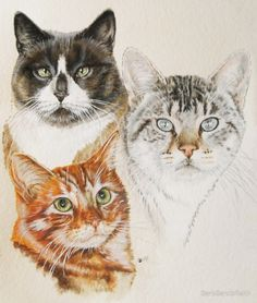 American Shorthair Painting by Barbara Keith American Shorthair Painting by Barbara Keith Different Types Of Cats, Kinds Of Cats, Watercolor Cat, Watercolor Animals, American Shorthair Cat, Guache, Beautiful Cat Breeds, Art Graphique, Cat Drawing