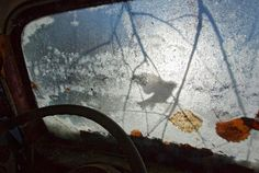 Credit: Pål Hermansen/GDT Fritz Pölking Prize 2013 Tit silhouetteIn winter, the birds frequently search in and around the cars for food as both insects and seeds are plentiful. '... people, especially children, have to be made aware, otherwise we will be getting more and more alienated from nature, looking at it as a theoretical value. But it is equally important to include people in the images in different ways, therefore one of my favourite topics is the interaction …