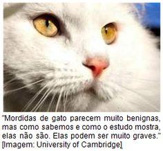 Por que as mordidas de gato são tão perigosas?  http://www.farmaceuticacuriosa.blogspot.com.br/2014/02/por-que-as-mordidas-de-gato-sao-tao.html