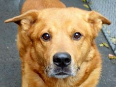 #urgentpart2 Tracy Olson 1 day agoPublic 6 Year Old JORDI to be destroyed Fri Nov 21 Manhattan NY Jordi, owned most of his life by the same family is with us as his loved ones moved into a shelter. He is a beautiful dog who has been outstandingly cared for. He lived in harmony with many kids, two female pitties and a few cats. Jordi comes with excellent recommendations. He would be very protective of his family, very loving, playful and would know a number of commands. We are told he is very…