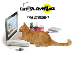 Get Your Pet a Cat Scratcher Laptop for Your Peace of Mind