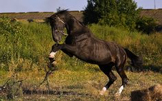 1920x1200 beautiful pictures of horse