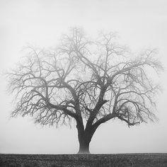 old oak                                                                                                                                                                                 More