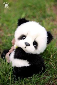 Cute little animals Cute little animals . Super Cute Puppies, Baby Animals Super Cute, Cute Stuffed Animals, Cute Little Animals, Cute Dogs And Puppies, Cute Funny Animals, Cute Cats, Big Cats, Baby Animals Pictures