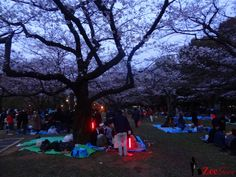Hanami, Karaoke, and the Randomness of Tokyo