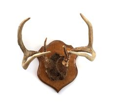 Mounted Whitetail Deer Antlers by lakesidecottage on Etsy
