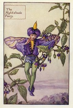 Cicely Mary Barker The Nightshade fairy was first published in London by Blackie, 1925 in Flower Fairies of the Summer. Containing 24 lovely Flower Fairies. It was reproduced a few years later in a compilation book The Book of the Flower Fairies, London, Blackie, 1927.