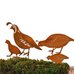 Elegant Garden Design California Quail Family Stake, Steel Silhouette with Rusty Patina * Want to know more, click on the image.
