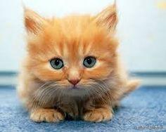 gatos hermosos - Buscar con Google