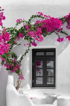 Bougainvillea, Greek Island Tours, Beautiful Flowers, Beautiful Places, Pintura Exterior, Mykonos Greece, Vacation Resorts, Tropical Garden, Fruit Garden