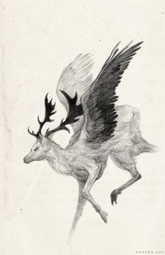 Drawings of Hybrid Creatures in Mythology by Rovina Cai (Peryton)