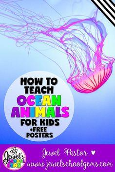 Ocean Animals for Ki