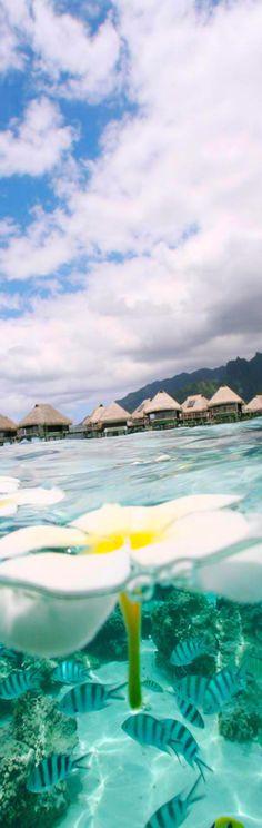 Questo è proprio un sogno...  Hilton Moorea Lagoon Resort and Spa..French Polynesia