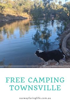 Free camping Townsville is also dog friendly and available at BP, Bluewater Park and Saunders Beach. Find all the information on Townsville camping here. #freecamptownsville #dogfriendlytownsville #ourwayfaringlife Stradbroke Island, Shady Tree, The Far Side, Water Activities, Free Things To Do, Great Barrier Reef, Sunshine Coast, Public Transport, Dog Friends