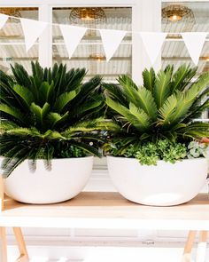 Easy Container Gardening Ideas for Your Potted Plants Potted Plants Patio, Indoor Plants, House Plants, Planters, Backyard House, Backyard Landscaping, Outdoor Pots, Outdoor Gardens, Pot Jardin