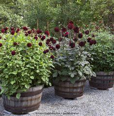 Garden Planters, Succulents Garden, Landscape Design, Garden Design, Rustic Garden Decor, Lawn Edging, Backyard Lighting, Love Garden, Garden Cottage