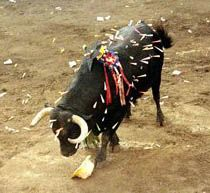 A bull at the Christian festival of San Juan, in Coria, Extremadura, Spain. very christian. your God would be very proud. Horrible People, Animal Welfare, Greed, Hades, Beautiful Creatures, Mother Nature, Cry, Christianity, Religion