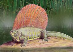 Dmitry Bogdanov - dmitrchel@mail.ru Edaphosaurus boanerges // http://nl.wikipedia.org/wiki/Edaphosauridae