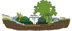 Rain Garden: a shallow depression - deep) with a soil mixture and collection of plants that collect, absorb, and filter rainwater. They allow homeowners to redirect runoff that would otherwise go to a municipal sewer system. Water Collection System, Rain Collection, Rainwater Harvesting System, Sewer System, Permaculture Design, Lawn Sprinklers, Rain Garden, Dry Creek, Water Conservation