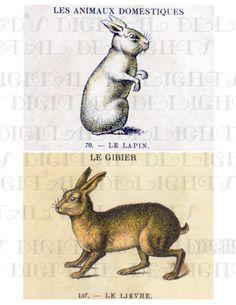 2 Different FRENCH BUnny Rabbit Vintage by DandDDigitalDelights