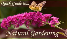 Quick Guide to Natural Gardening