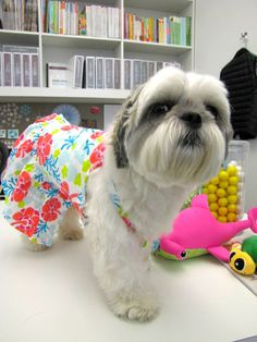 What are the pets of Martha Stewart Living Omnimedia wearing today? #marthastewartpets #hibiscus #petsmart