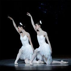 The Australian Ballet Graeme Murphy's Swan Lake  Ako Kondo and Juliet Burnett. Photography Jeff Busby