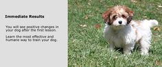 Professional Fairfax Virginia dog trainer Lead With Fun builds a happy and trusting relationship between owners and their pets