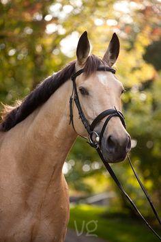 ♥ Beautiful ♥ Horse ♥