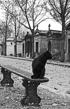 BLACK CAT RESTING ON CEMETERY BENCH……WONDER IF THIS IS WHY A BLACK CAT IS CONSIDERED BAD LUCK ??……THOSE ARE CRYPTS ACROSS THE STREET………..ccp