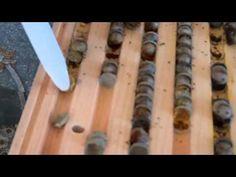 Created on February 2011 using FlipShare. Mason Bees, Bee House, Bees Knees, Bee Keeping, Preschool Curriculum, Homeschooling, Hydroponics, Bird Houses, Bee Hotels