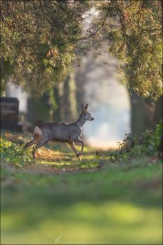 deer in forest sunlight Cat Stevens, House In Nature, Magical Forest, Spring Has Sprung, Mother Earth, Grape Vines, Sunlight, Wander, Paths