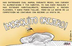 mosquito orejero
