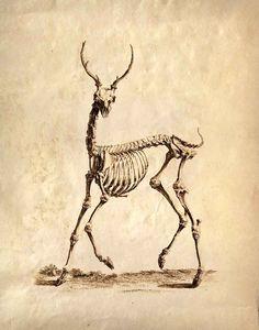 anatomy vintage - Buscar con Google