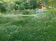 My garden with a glimps of  the Sauna