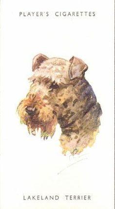 DOG Lakeland Terrier, Portrait Trading Card, 1940