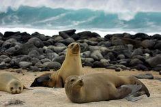 Lecciones de ciencia en las islas Galápagos.