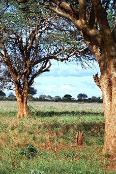 Kenya Photography, Kenya Landscape, Nature Photo, Kenya Print, Countryside print, Safari print, Wall Art, Landscape Print, Kenya Art, Poster - pinned by pin4etsy.com