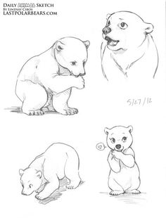 Lindsay Cibos' Art Blog: Daily Animal Sketch – Polar Bear cubs
