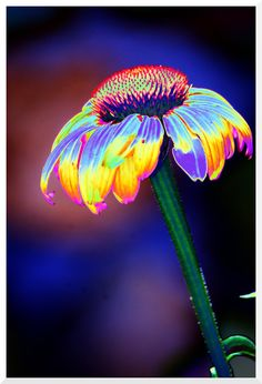 Groovy daisy