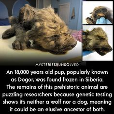 Wow Facts, Wtf Fun Facts, Interesting Facts About World, Interesting History, Creepy Facts, Creepy Stories, Shocking Facts, Prehistoric Creatures, Science Facts