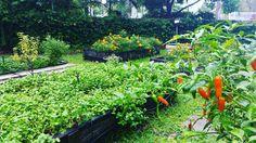 Our gardens are thoroughly enjoying a drink. . #rainydays #currumbinrsl #alleysrestaurant #southerngc #currumbincreek #supportlocals #lovinglocal #localfood #freshfood #freshfoodz #goldcoastlife