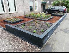 Backyard Garden Design, Garden Landscaping, Landscape, Plants, Seeds, Front Yard Landscaping, Scenery, Plant, Corner Landscaping