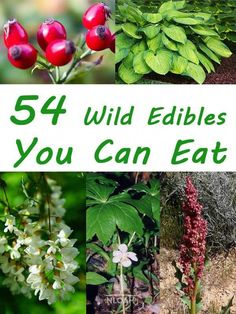 Survival tip know how to identify these edible plants to ensure safety. Discovering the value of edible plants for nutrition is also a good idea. Survival Food, Outdoor Survival, Survival Skills, Survival Tips, Survival Supplies, Survival Knots, Survival Weapons, Survival Shelter, Healing Herbs